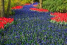 blue_flower_bed_199002