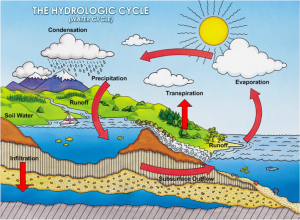 Hydrologic Cycle.jpg